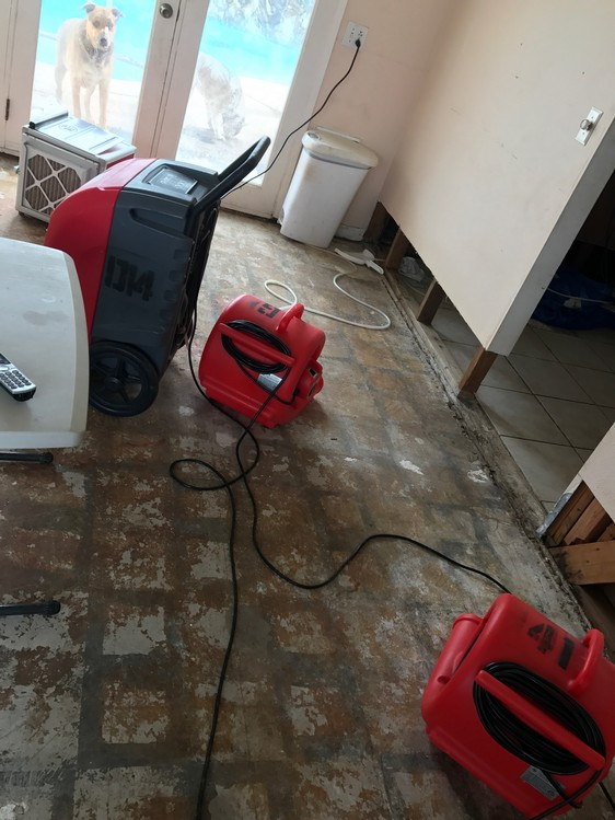 Dehumidifying Floor Affected By Flood Damage - San Diego, CA